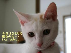 Shikoku0903_1tnp
