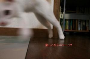0908madcat_12tnp
