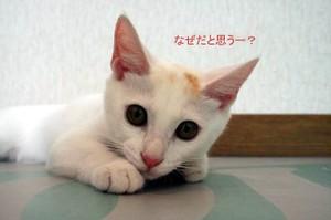 0908madcat_14tnp