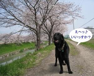 0402sahogawa_17tnp