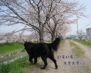 0402sahogawa_18tnp_2