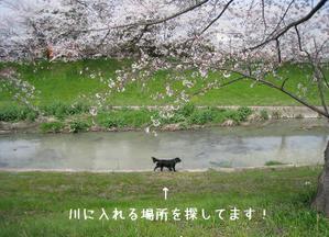 0402sahogawa_19tnp