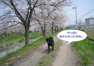0402sahogawa_20tnp