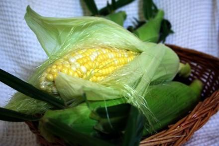 Corn0829tnp1