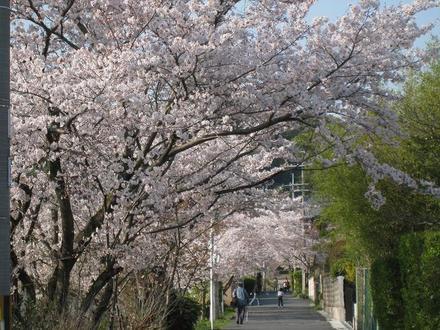 Sahogawa0406_21