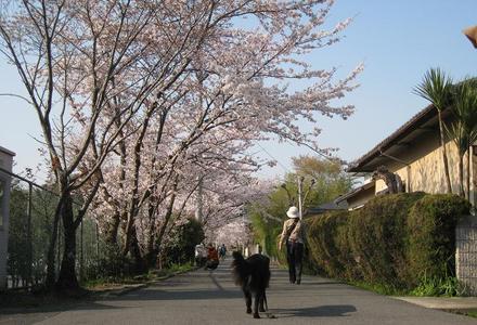 Sahogawa0406_22