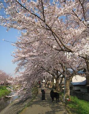 Sahogawa0406_29