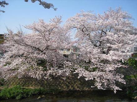 Sahogawa0406_33