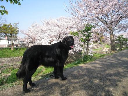 Sahogawa0406_34