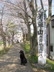 Sahogawa0406_38
