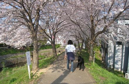 Sahogawa0406_39
