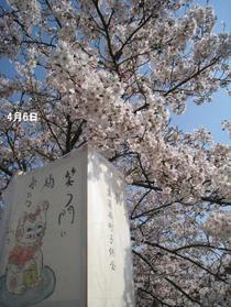 Sahogawa0406_50