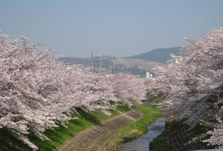 Sahogawa0406_52