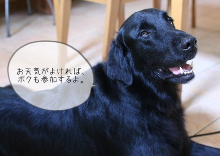 S090810plusdog2_7