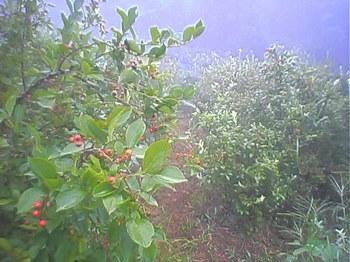 Blueberry060813_2