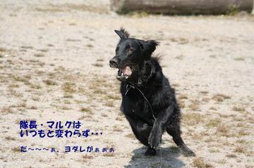 Doggy0321a_16tnp