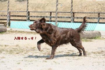 Doggy0321a_24tnp