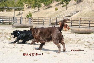 Doggy0321a_25tnp