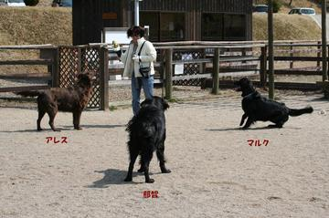 Doggy0321atnp