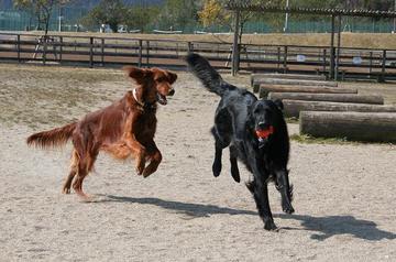 Doggy0321b_44tnp