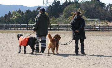 Doggy0321b_48tnp