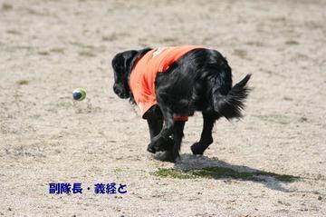 Doggy0321b_4tnp