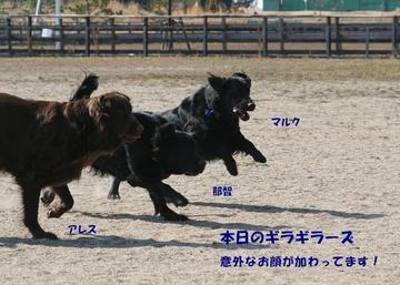 Doggy0321c_8tnp