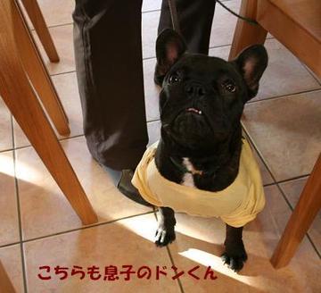 Lupin_bd1219a_4tnp