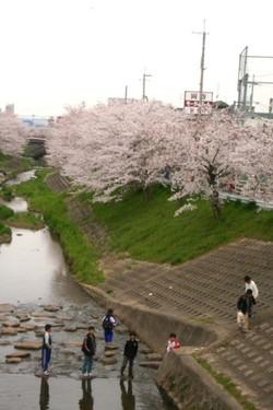 Sahogawa0407btnp2