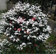 Schnee0313a