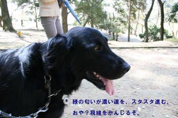 Todaiji0410a_15tnp