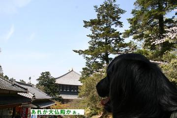 Todaiji0410a_17tnp