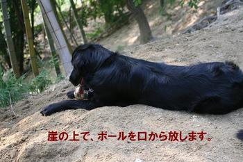Yasei061014a_16tnp