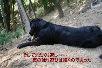 Yasei061014a_16tnp2