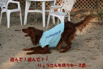 Yasei061014a_35tnp