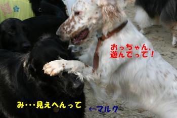 Yasei061014a_8tnp