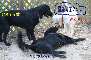 Yasei061014btnp