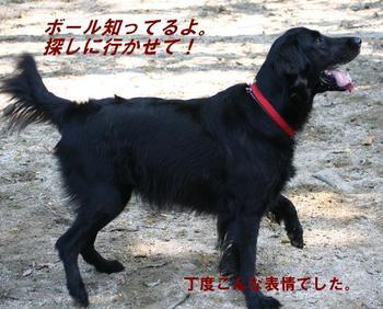 Yoshimark1015_17tnp