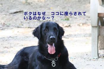 Yoshimark1015_35tnp